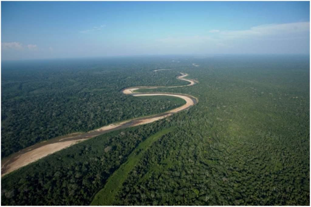 Convocatoria Proyecto «Todos los Ojos en la Amazonía»