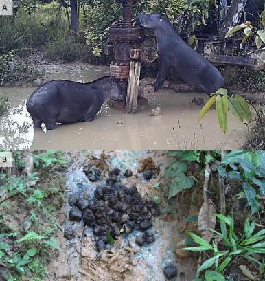 Las poblaciones del Amazonas consumen animales que se alimentan en zonas contaminadas