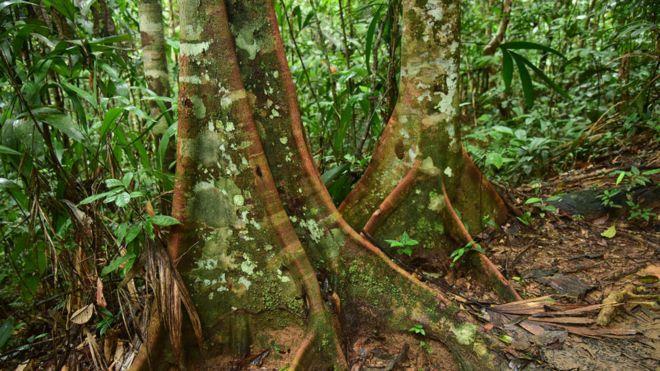 CONSULTORÍA PARA EL PROYECTO: AVANZANDO LA GOBERNANZA MUNDIAL POR LOS BOSQUES: DEFENDIENDO LA AMAZONÍA VIVA PARA LA HUMANIDAD