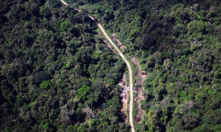 Perú: Pueblos indígenas logran que el ejecutivo observe proyecto de ley de carretera Pucallpa-Brasil