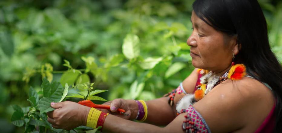 """Programa de fomento de """"Nuestros Futuros Bosques–Amazonia Verde"""" nombra a 24 mujeres indígenas como líderes del futuro medioambiental de la Amazonia"""