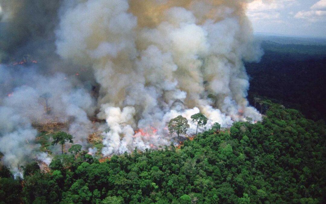 Principales científicos amazónicos lanzan un llamado urgente a la acción en el Amazonas